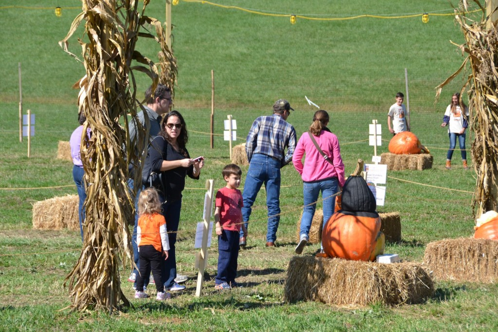 People of all ages loved the 2015 Hopewell Valley Arts Council's aMAZing Pumpkin Carve