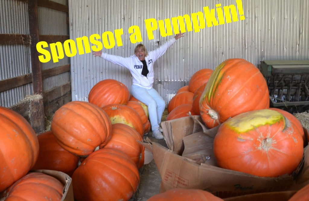 The Hopewell Valley Arts Council wants you to Sponsor an aMAZing Pumpkin