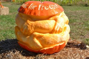 Curtis May Freedom Pumpkin Wins Hopewell Valley Arts Council aMAZing Pumpkin Carve