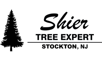 Shier Tree Expert Logo