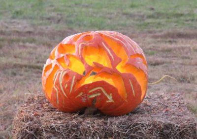 Pumpkin No. 34 Radek Sel